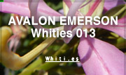 AVALON EMERSON - Whities 013 (Whities)