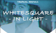 WHITESQUARE - In Light (Tropical Animals)